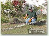 Nuisance Wildlife Removal can handle all your nuisance animal removal needs.