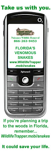 Use our mobile snake guide when you go camping or hiking in Florida's wilderness areas. It could save your life.