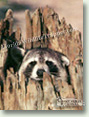 Nuisance Wildlife Removal Wildlife Index - Raccoons