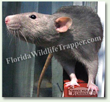 Citrus County Nuisance Animal Relocation and Removal
